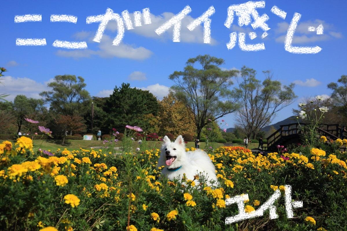 10_201310241958135dc.jpg
