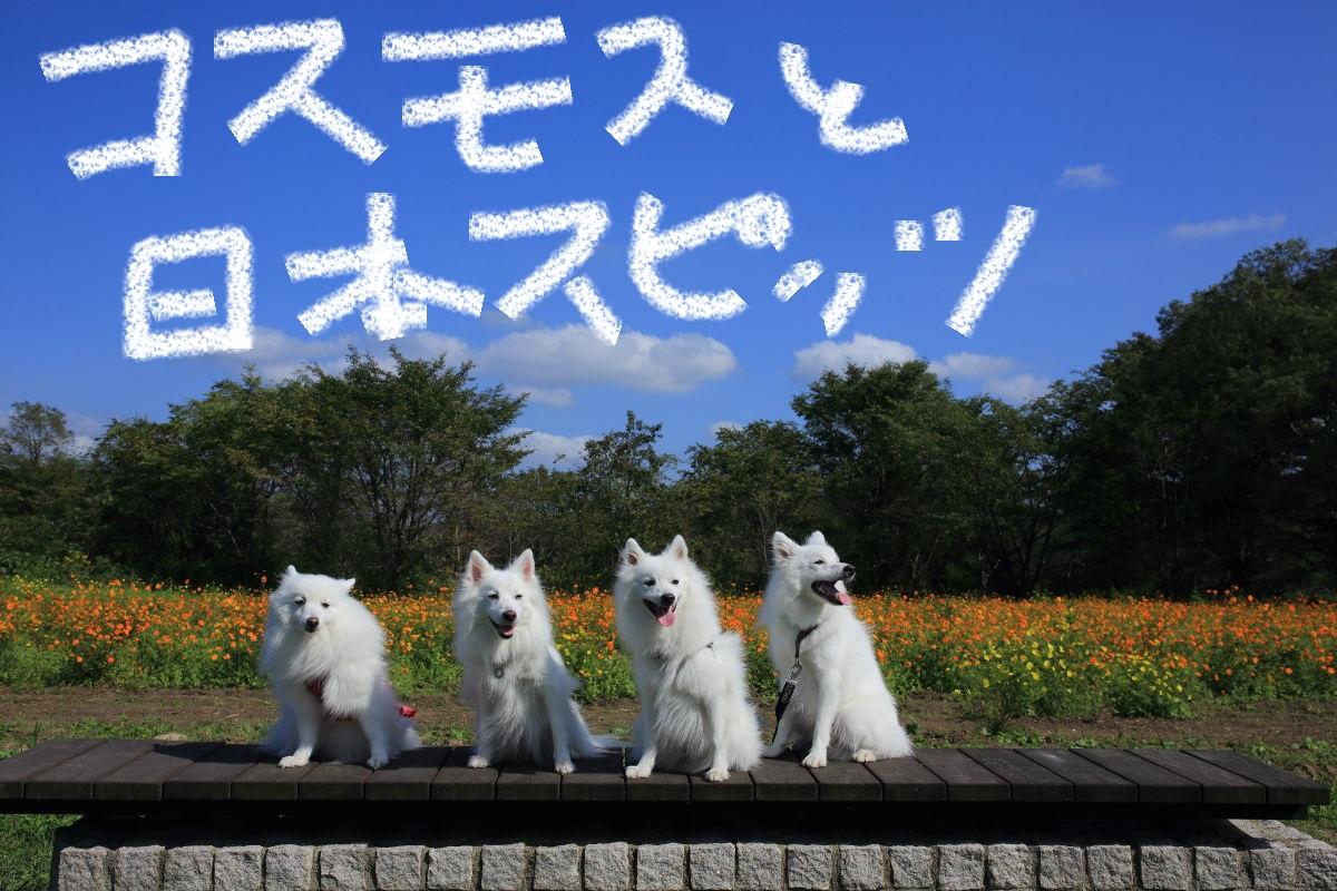 7_201310241958200dc.jpg