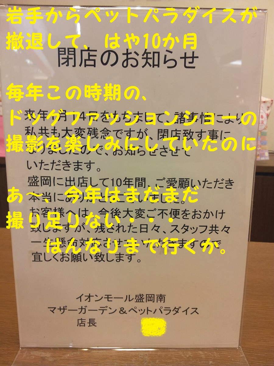 DPP_4538.jpg