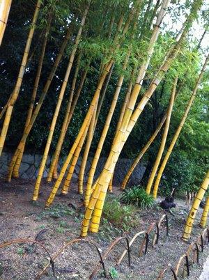 松花堂の竹