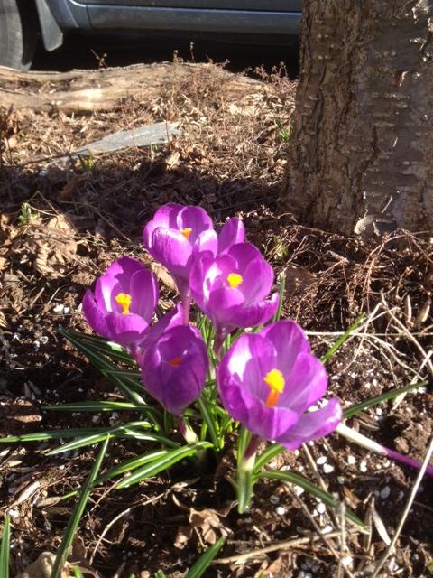 Spring1-17Apr13.jpg