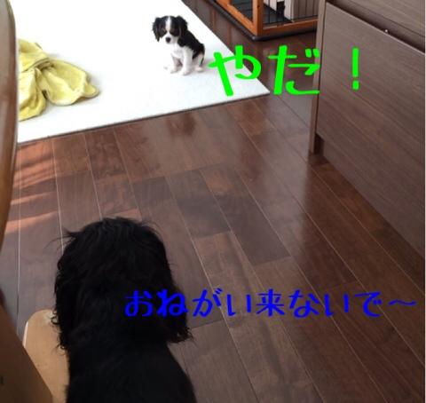 fc2blog_2014101710504772a.jpg