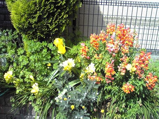 野生化した花々