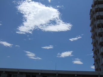 7/7 ベランダから見上げた空はすっかり夏空