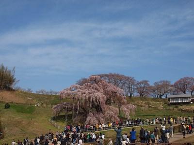 4/14 三春の滝桜
