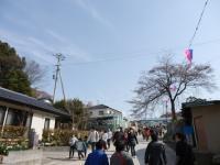 4/14 滝桜への坂道