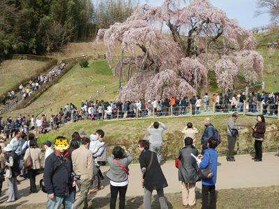 4/14 滝桜の前で記念写真