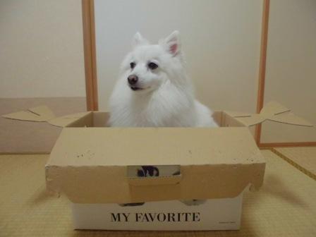 箱にINしてみました