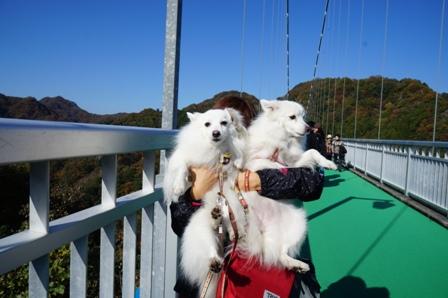 天神大吊橋2