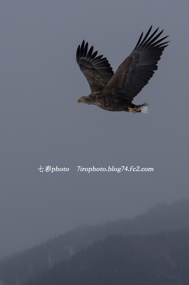 2014-02-08_北海道_1151