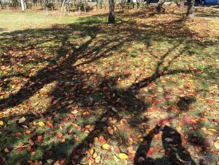 2013-11-06高田公園紅葉2