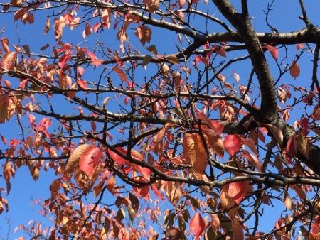 2013-11-06高田公園紅葉1