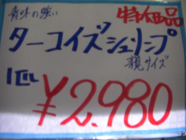 CIMG6656.jpg