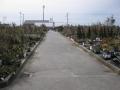 H26.2.6植木・苗物コーナー(横方向)@IMG_0733