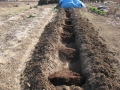 H26.2.12アスパラ定植予定地に堆肥(150.50)@IMG_0805