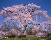 光と愛の感謝日記 2014年2月京都出張対面セッション募集のご案内