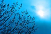 光と愛の感謝日記 「地球の子」と呼ばれた日