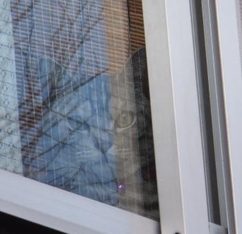 窓に何かが