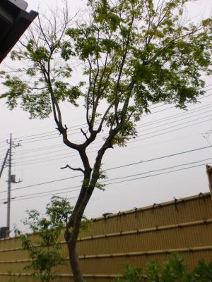 513植木