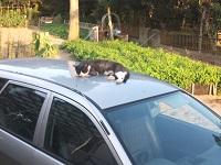 車で寝るブッチー