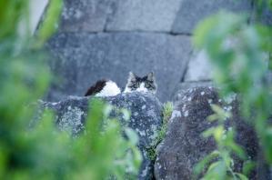 城壁の上の猫