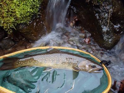 2013年の釣り・・・6回目
