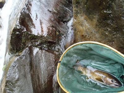 2013年の釣り・・・17回目