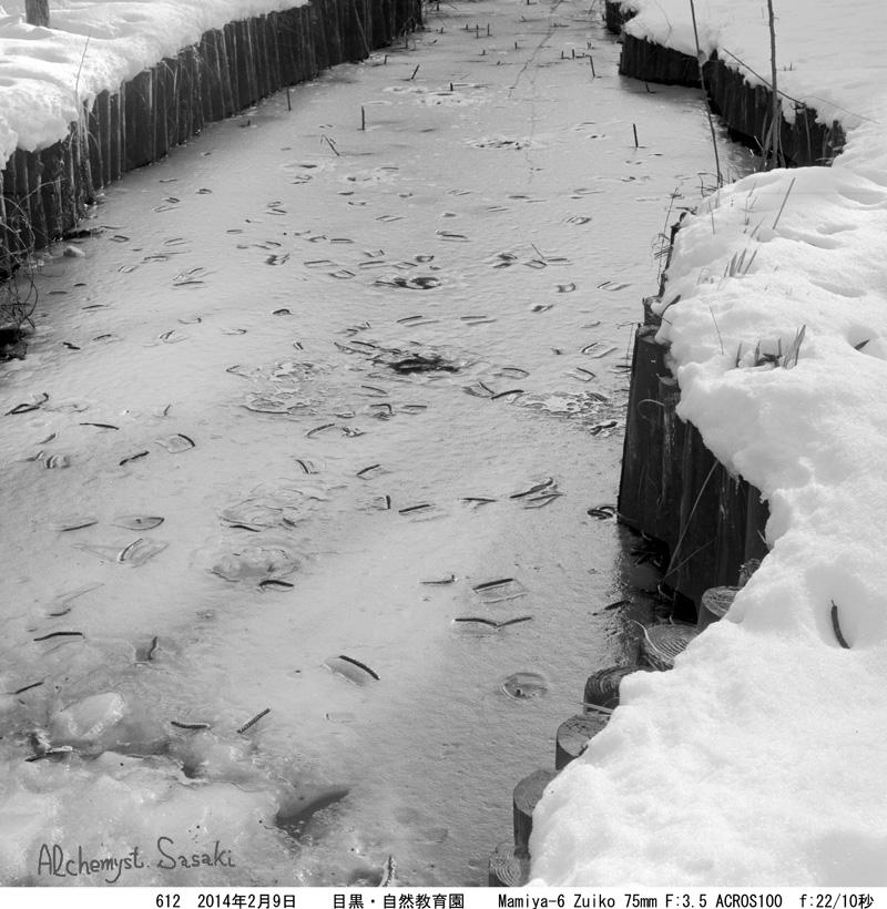 大雪の後612-11