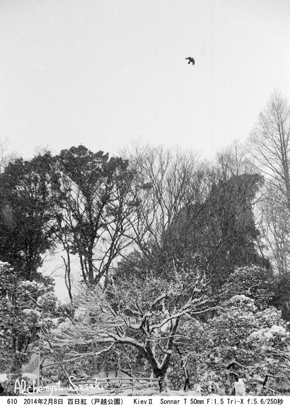 雪の戸越公園610-35 Ⅲ