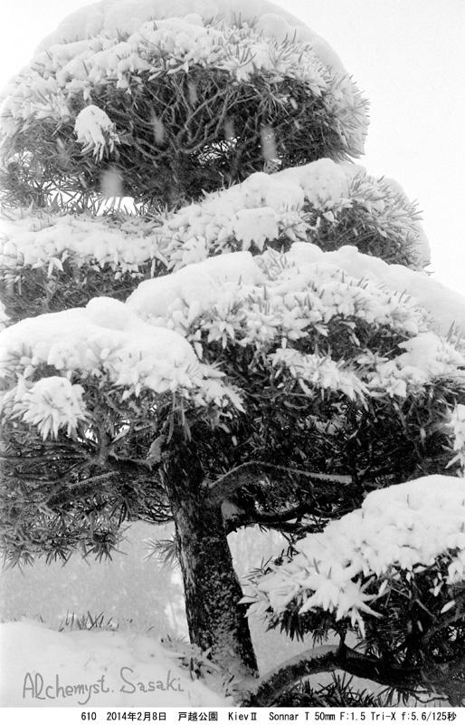 雪の戸越公園610-19 Ⅲ