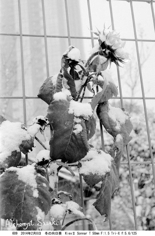 雪609-3 Ⅱ大雪