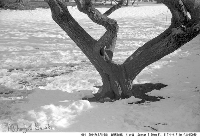雪614-6