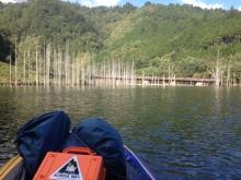 湖面の立木群 20130927
