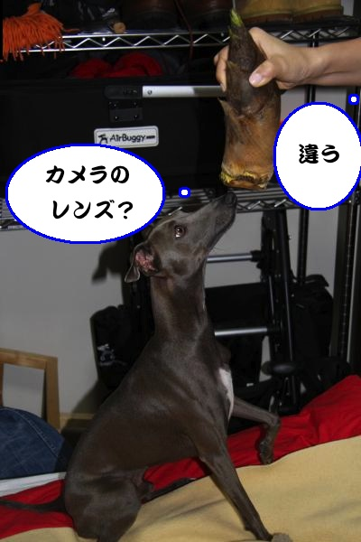IMG_7492-1_convert_20130504235733.jpg