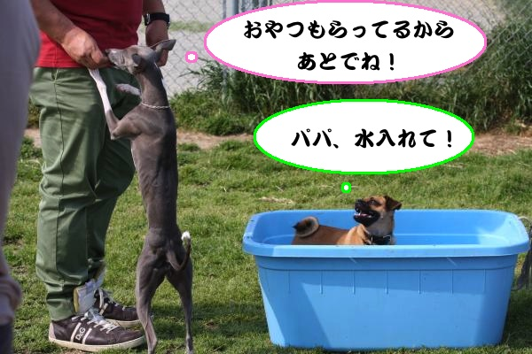 IMG_8573-1_convert_20130519203641.jpg