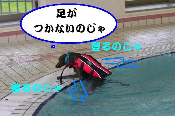 IMG_9514-1_convert_20130529220038.jpg