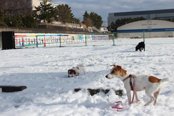 雪遊び15