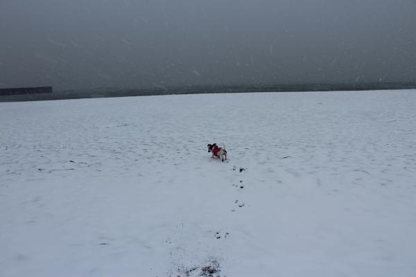海岸雪遊び