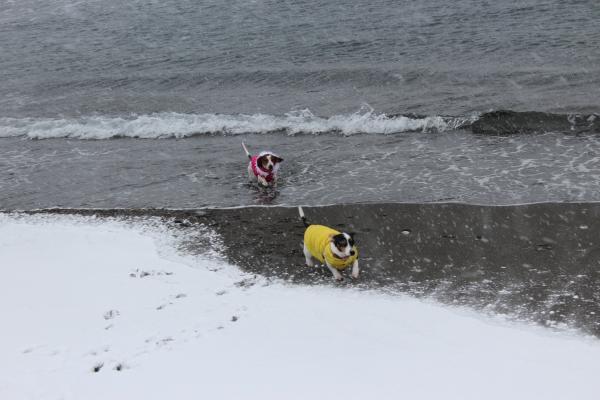 海岸雪遊び4