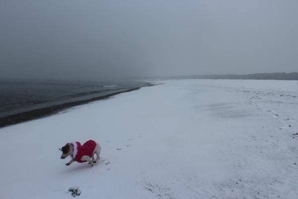 海岸雪遊び5