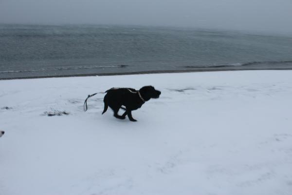 海岸雪遊び6