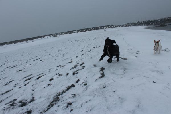 海岸雪遊び11