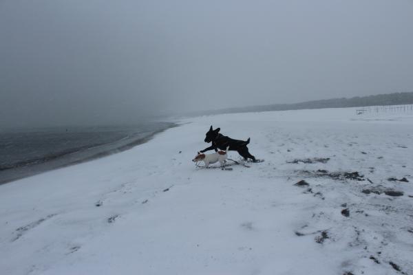 海岸雪遊び7