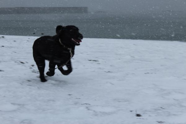 海岸雪遊び9