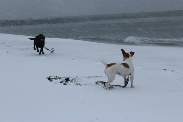 海岸雪遊び10
