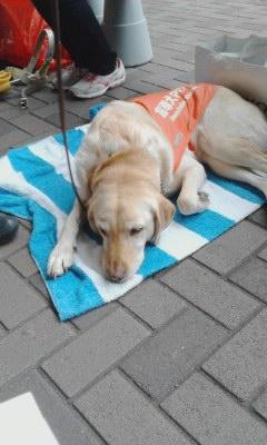 盲導犬キャンペーン20130928_1219
