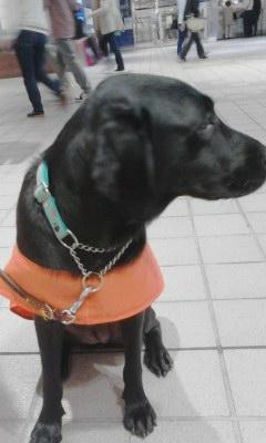 盲導犬キャンペーン20130928_1220