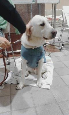 盲導犬キャンペーン20130928_1222