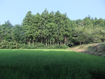 音のした林