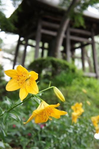 桜山界隈②